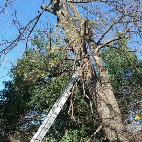 tree services san antonio