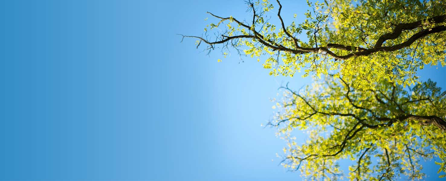 americas tree services